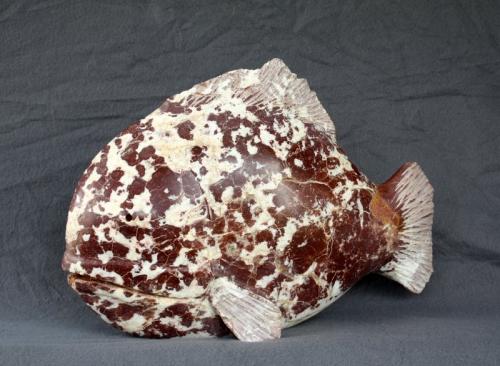 poisson appaloosa (2).JPG